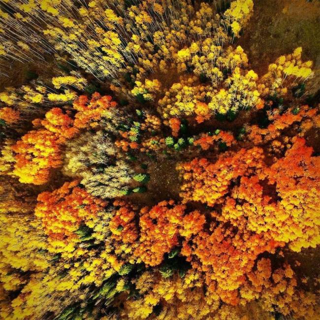 Kleurenpracht bomen herfst