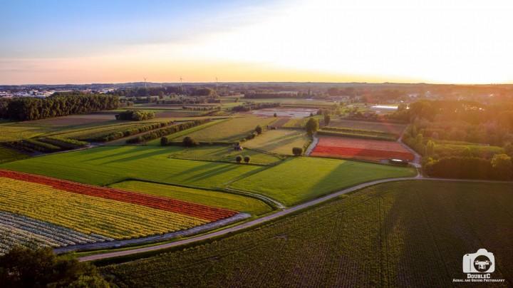 Tulpenveld Wetteren