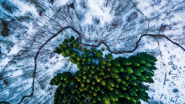 Kalbyris forest Denmark by Mbernholdt
